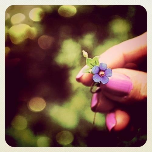 I pick you a flower